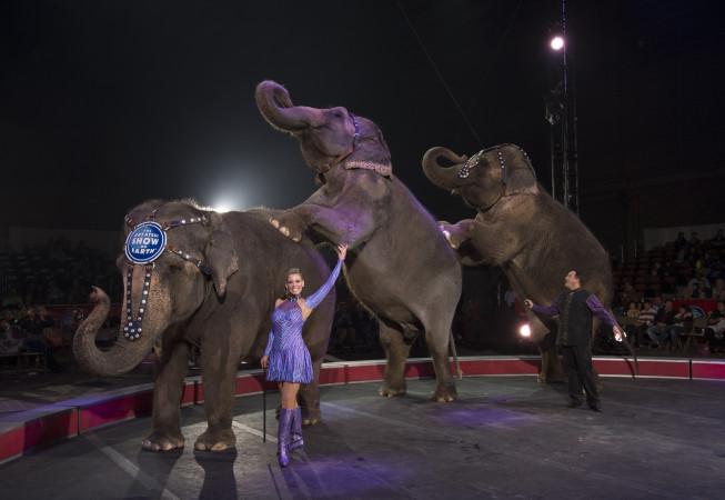 Carden Circus Elephants